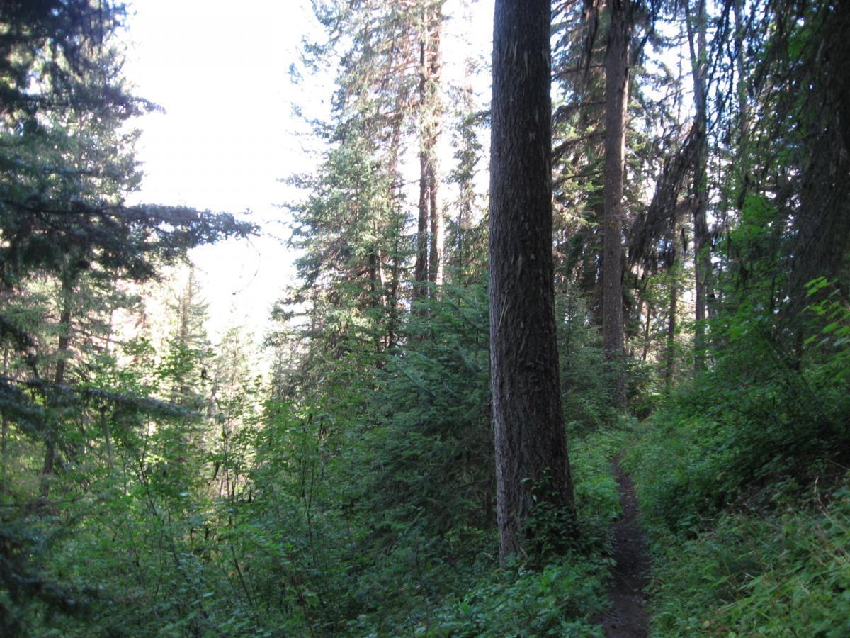 Reid Divide/trail #800 To Trail #801