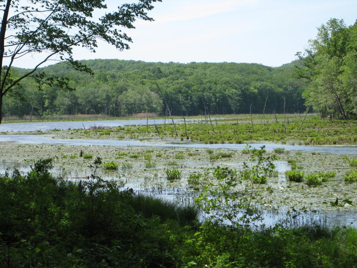 Bennetts Pond