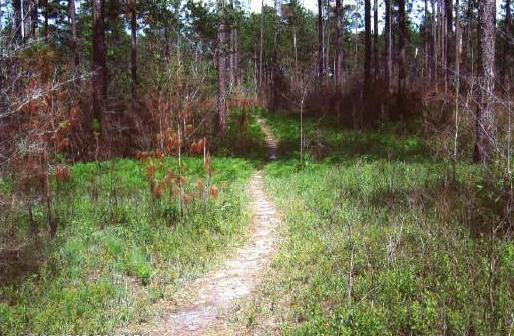 Golden Eagle Trail Complex / Longleaf Trace  Mountain Bike