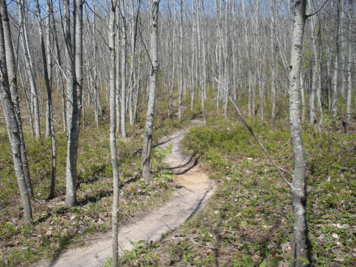 Vasa Trail