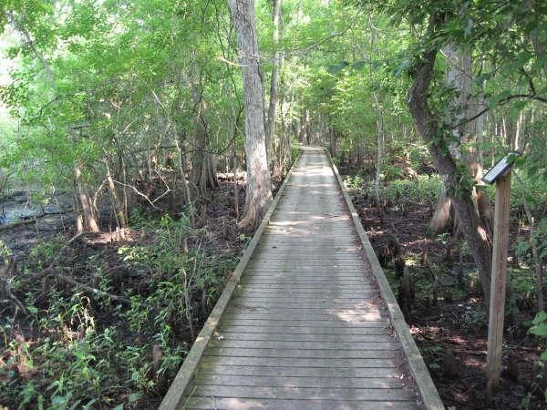 Lake Fausse Pointe Trail System