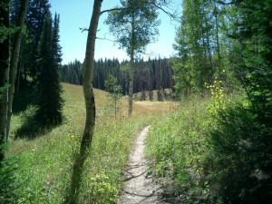 Scotts Run / Hinman Creek