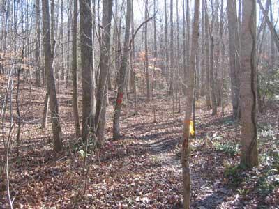 New Light Trails