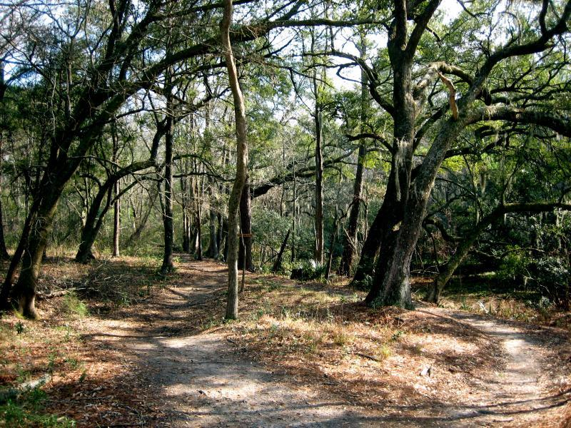 Marrington Trail Mountain Bike Trail In Goose Creek South Carolina