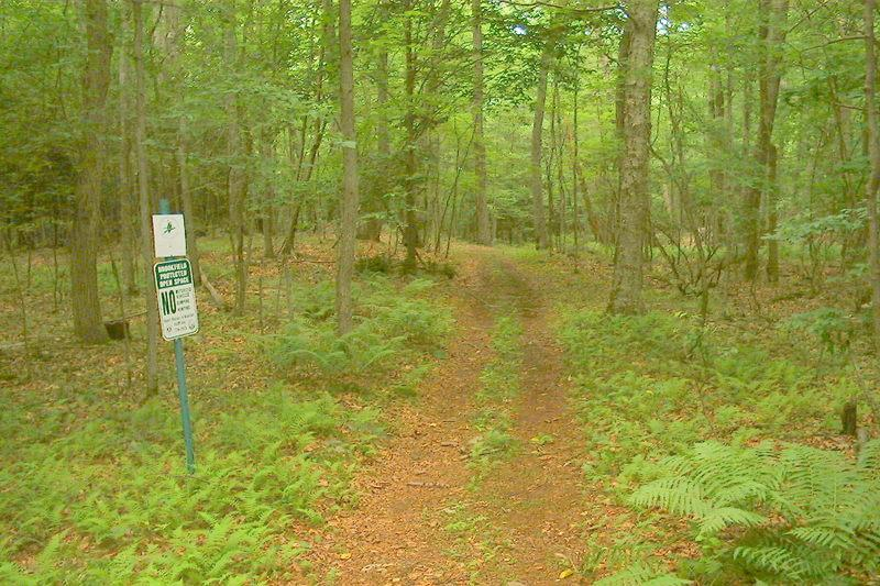 Dingle Brook Trail