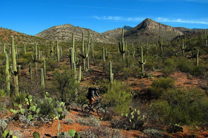 Arizona Trail: Cienega Corridor