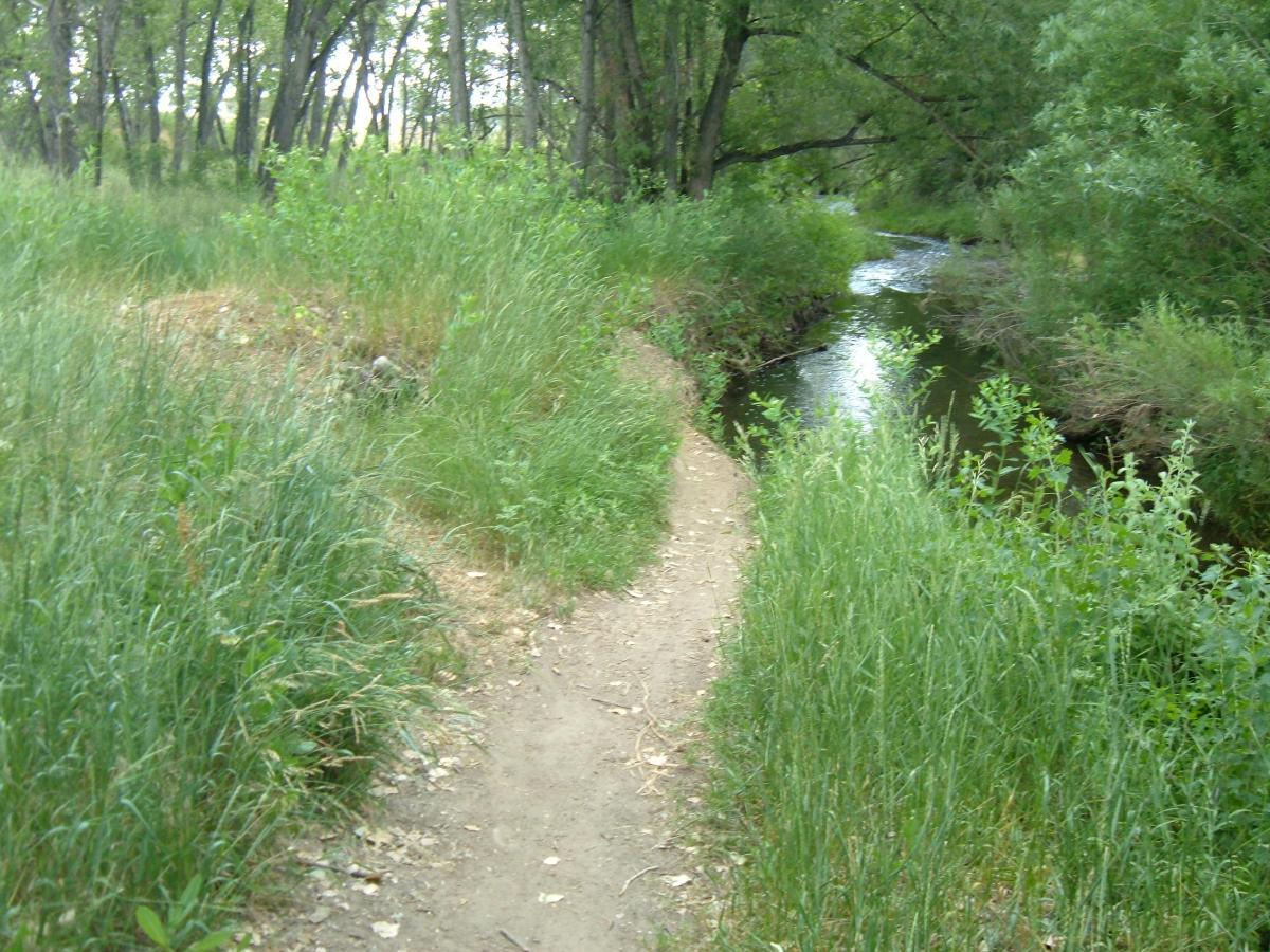 Coal Creek Trail