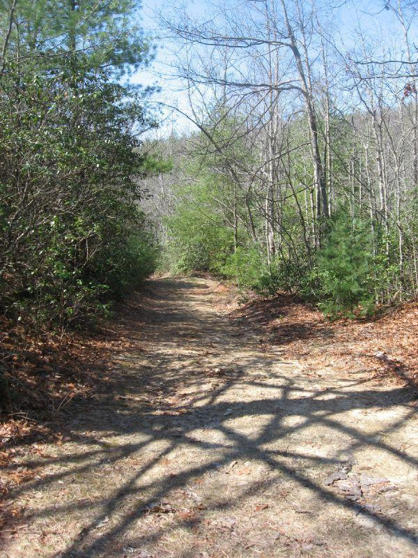 Buckhorn Creek Road #10