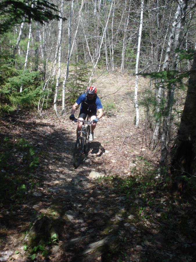 Bangor City Forest