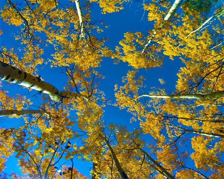 Colorado Trail: Kenosha Pass To Breckenridge