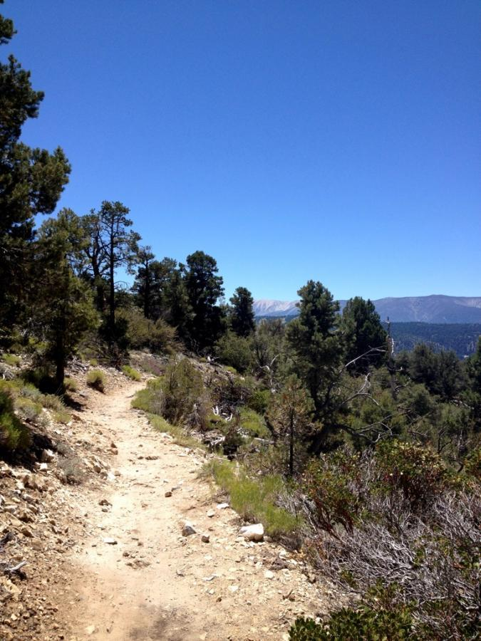 Cougar Crest Mountain Bike Trail in Big Bear City, California