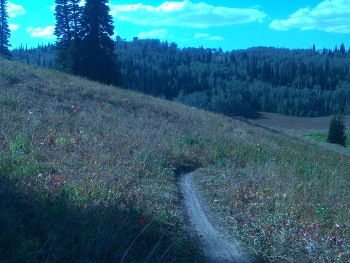 Quakie Ridge