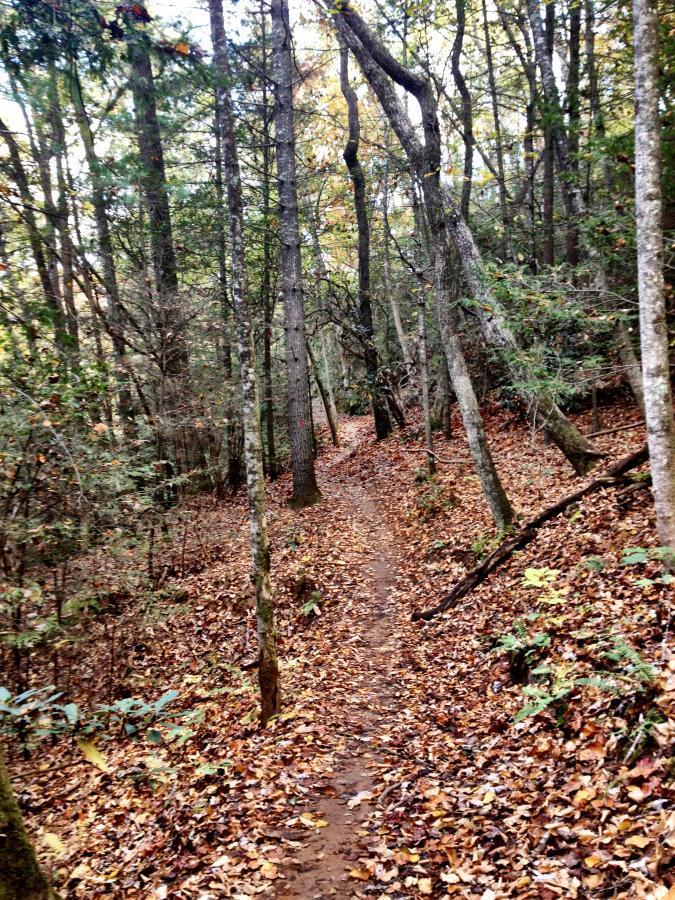Pinetree Loop / 336