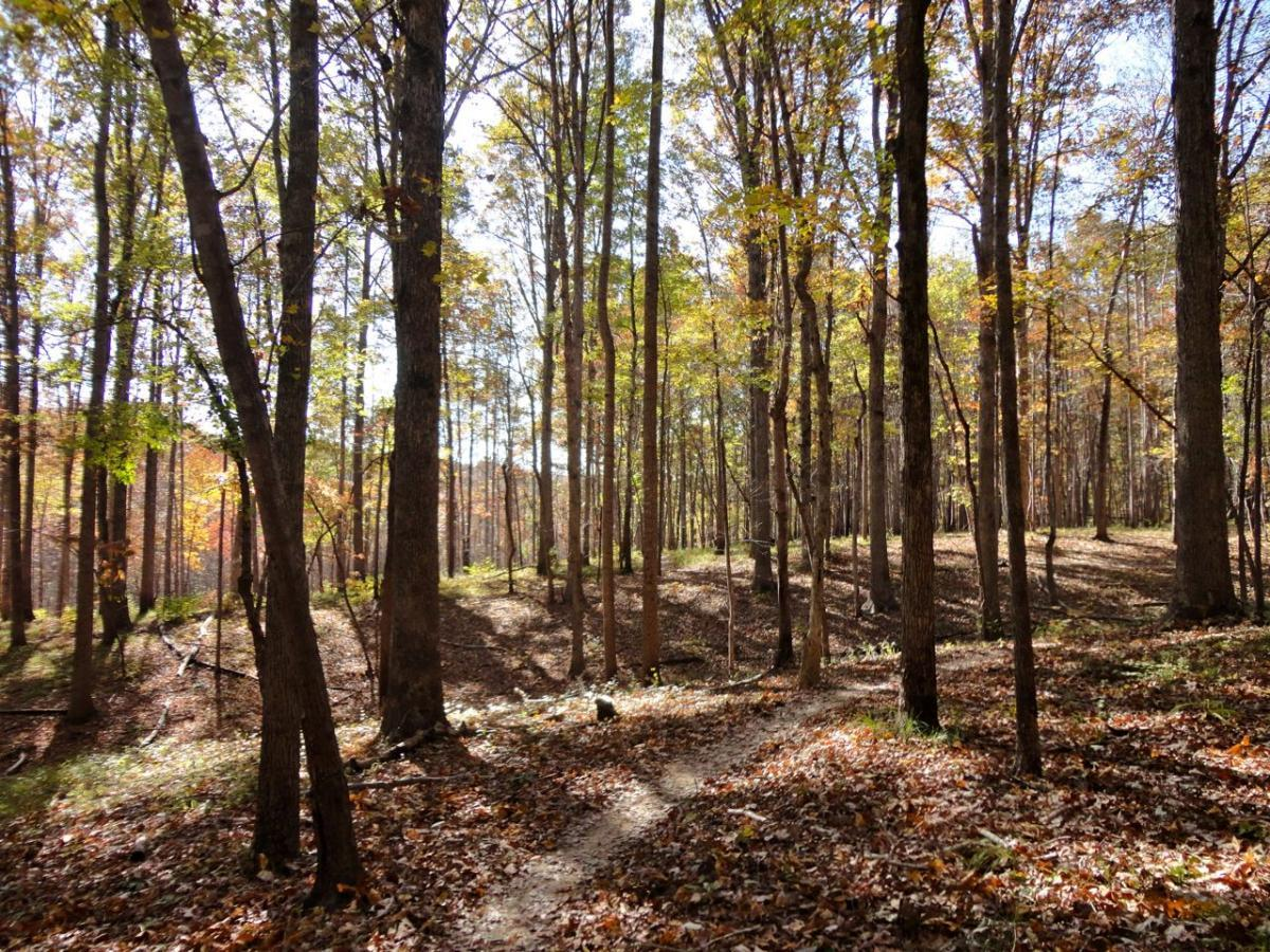 Uwharrie NF: Wood Run, Supertree And Keyauwee