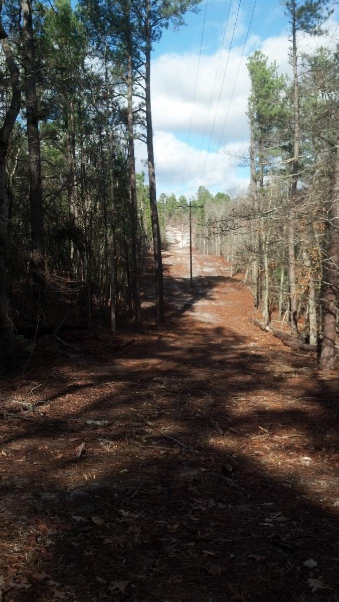 Sesquicentennial State Park Mountain Bike Trail In Columbia South