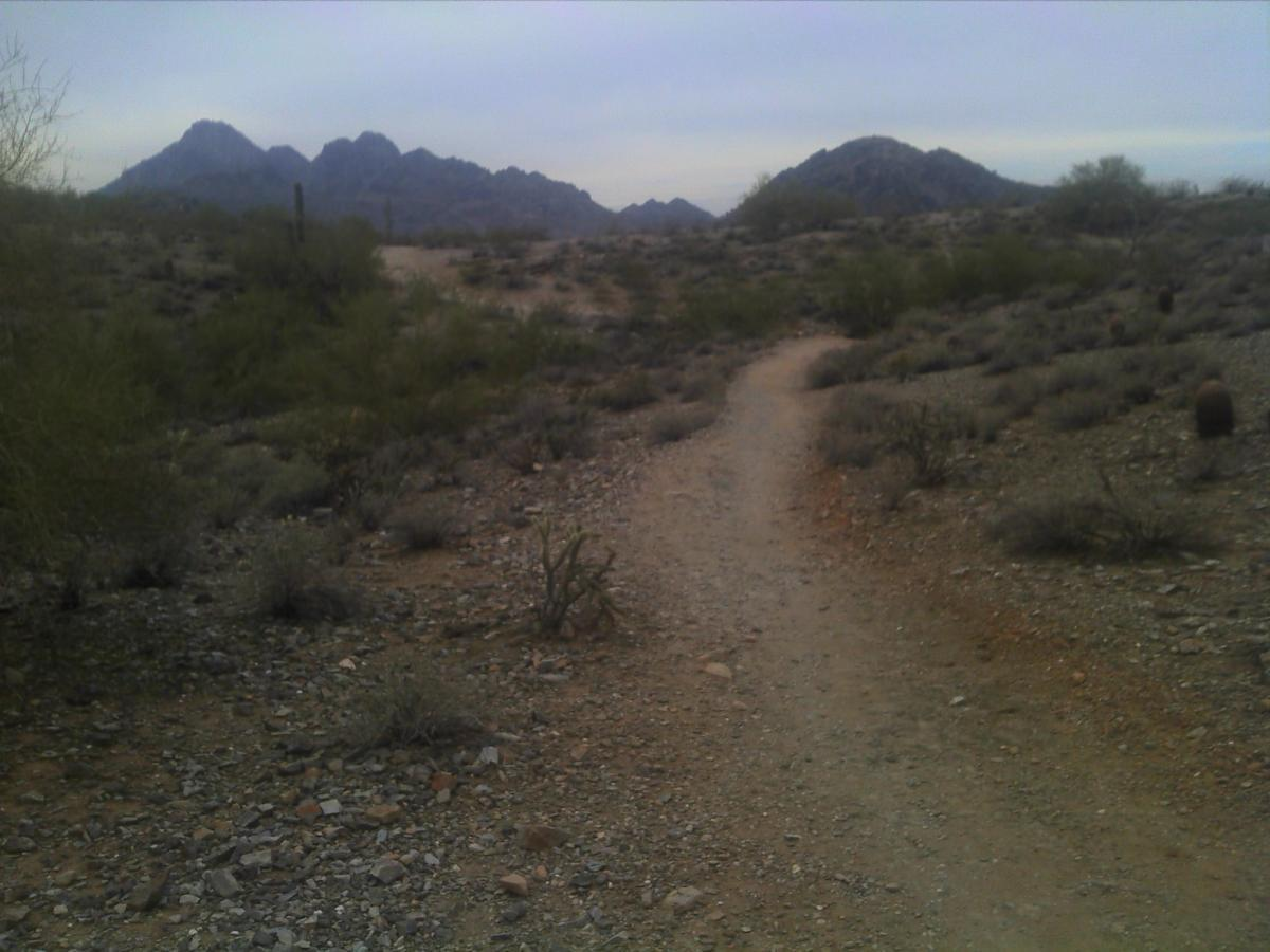 Trail #100