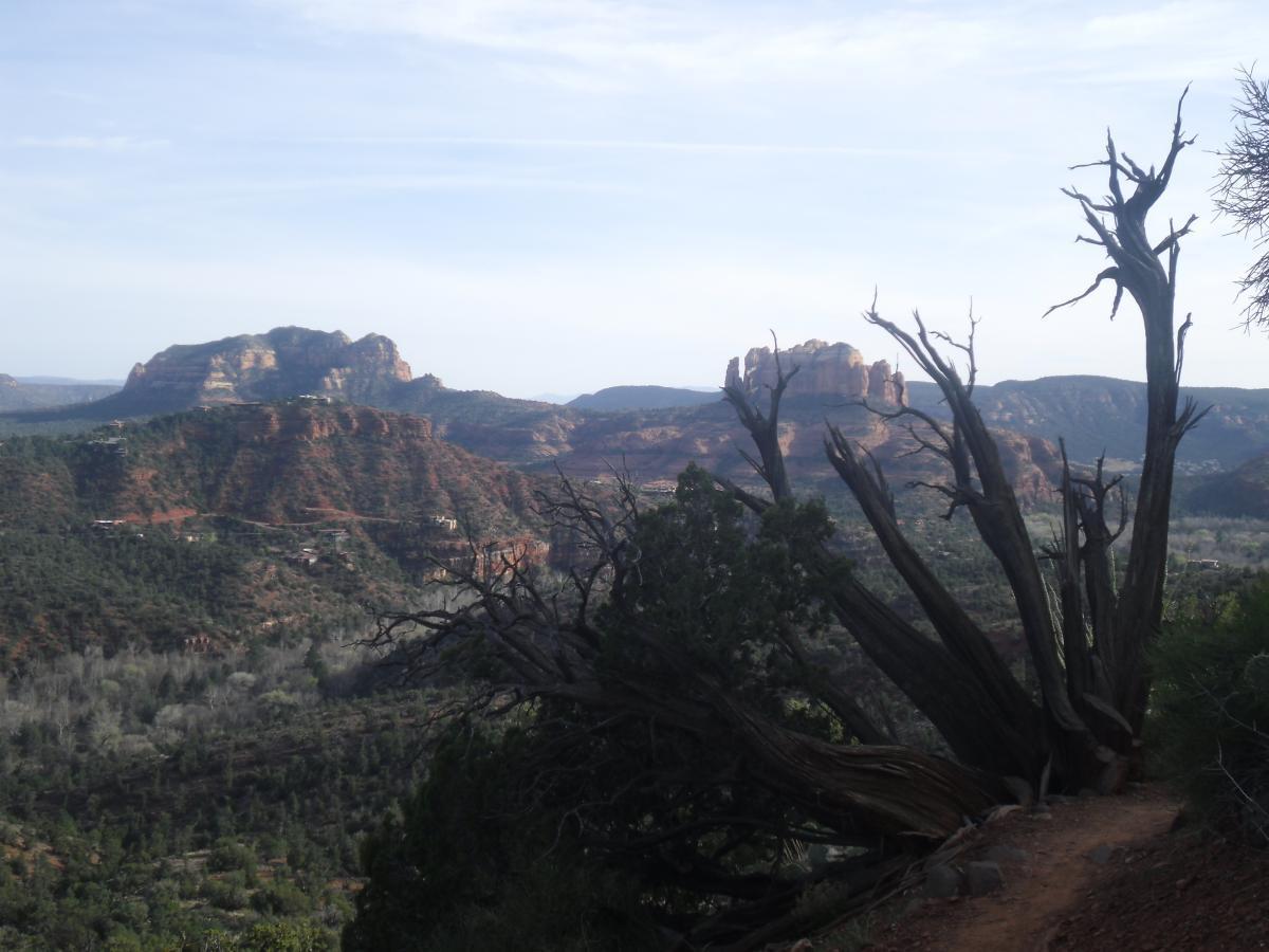 Airport Mesa Trail Network