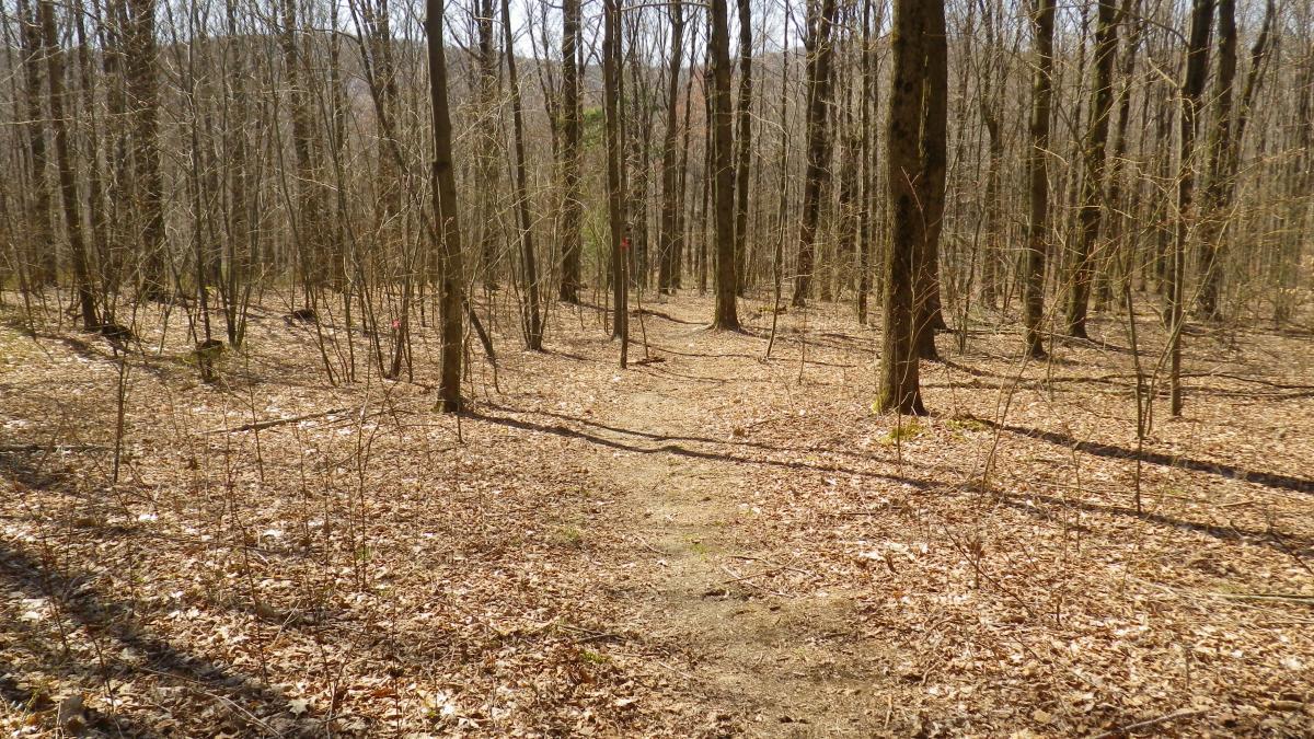 Harvey Mountain Trail