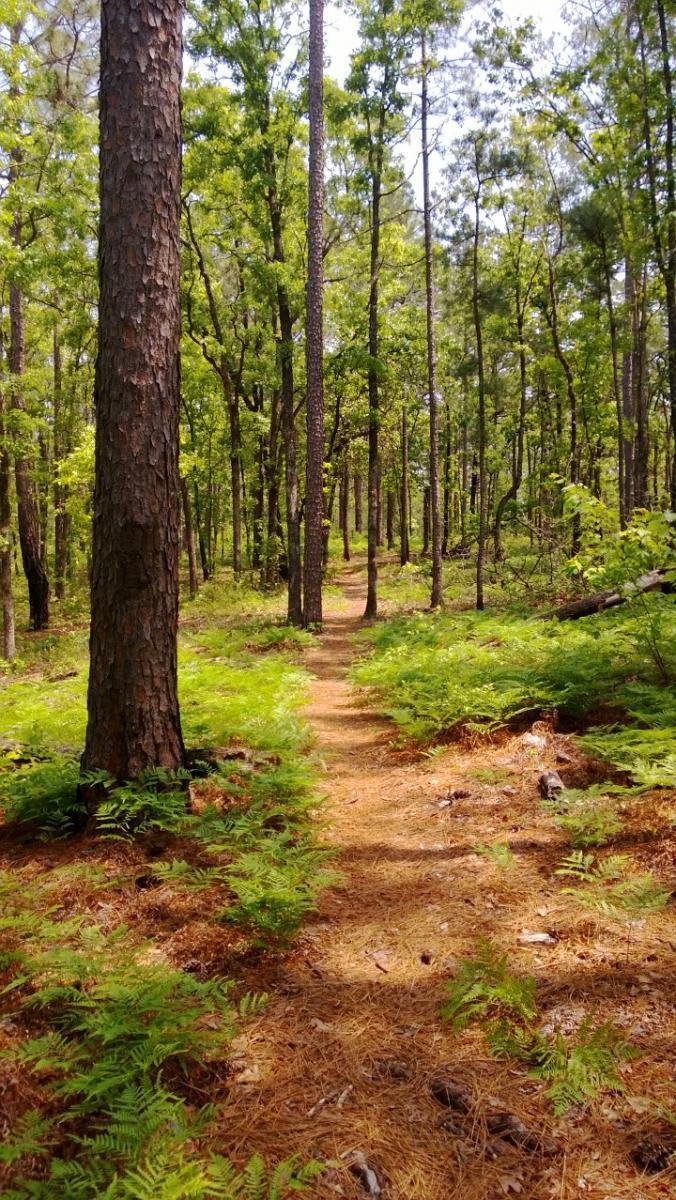 Wild Azalea Trail