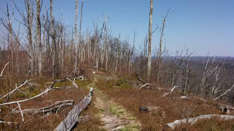 Tussey Mountain Trail