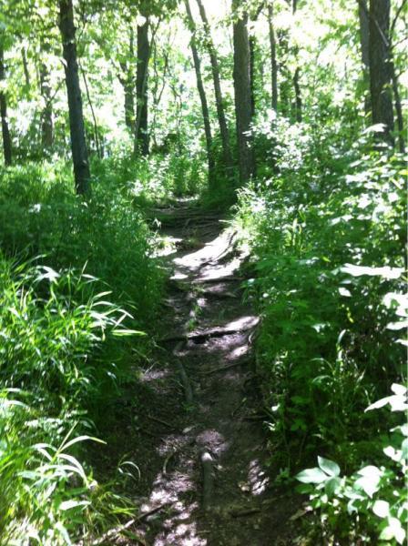 East Lick Creek Trail