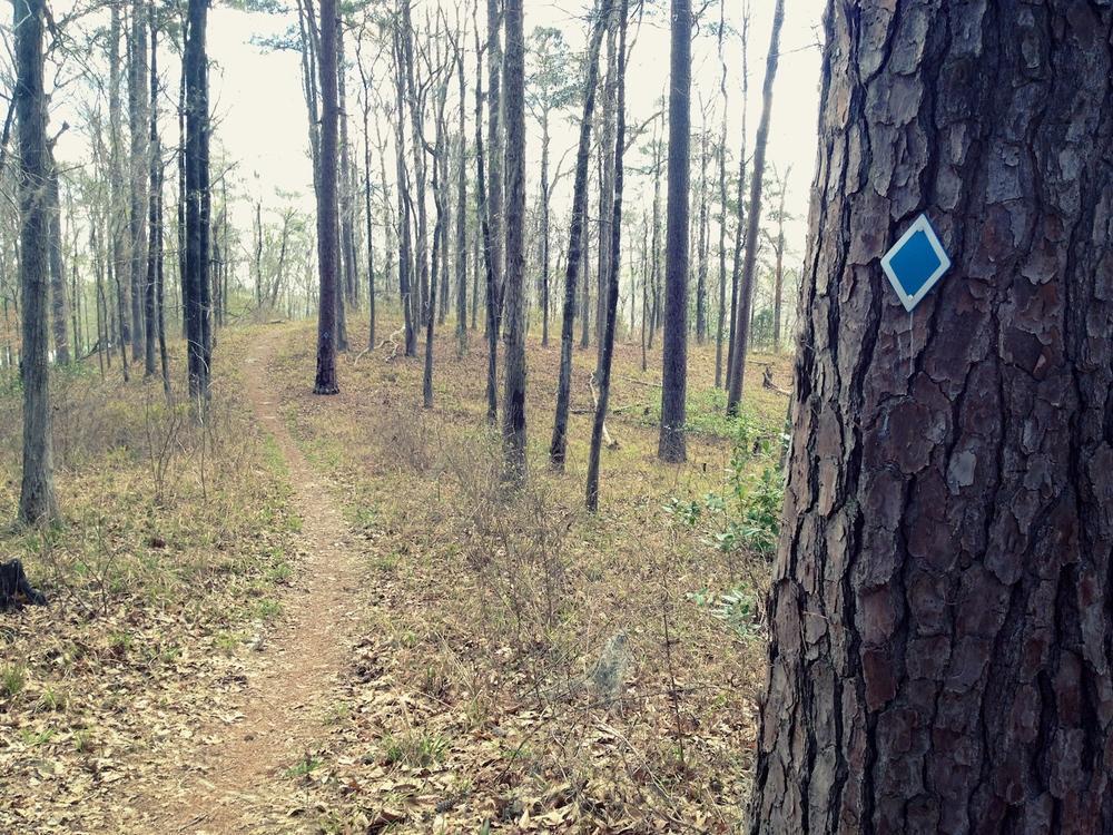 Kincaid Lakeshore Trail