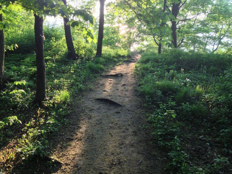 High Cliff State Park Mountain Bike Trail In Sherwood Wisconsin