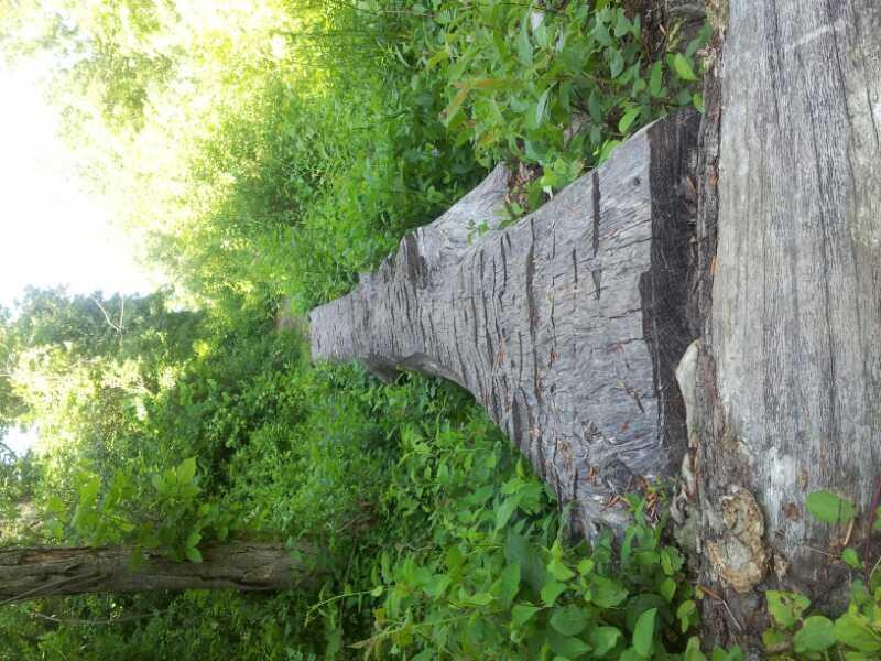 Milford Trail