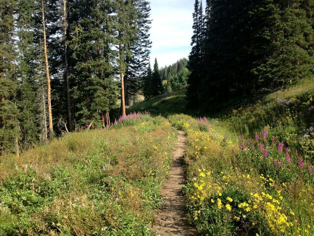CDT / Wyoming Trail #1101: Dumont Lake to Buffalo Pass