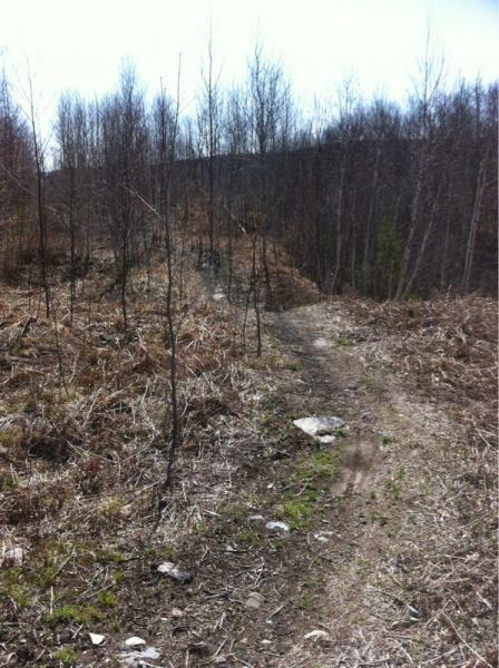 Naughton Trails