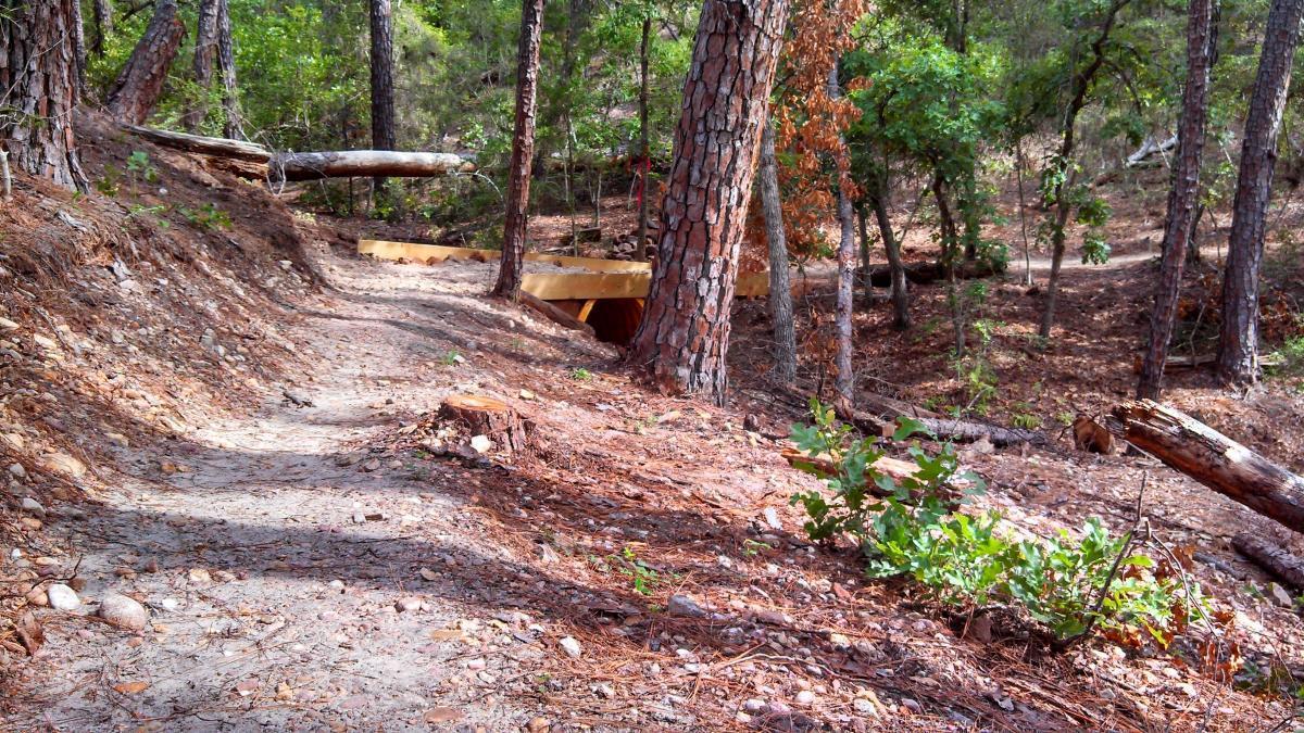 Buescher State Park Mountain Bike Trails