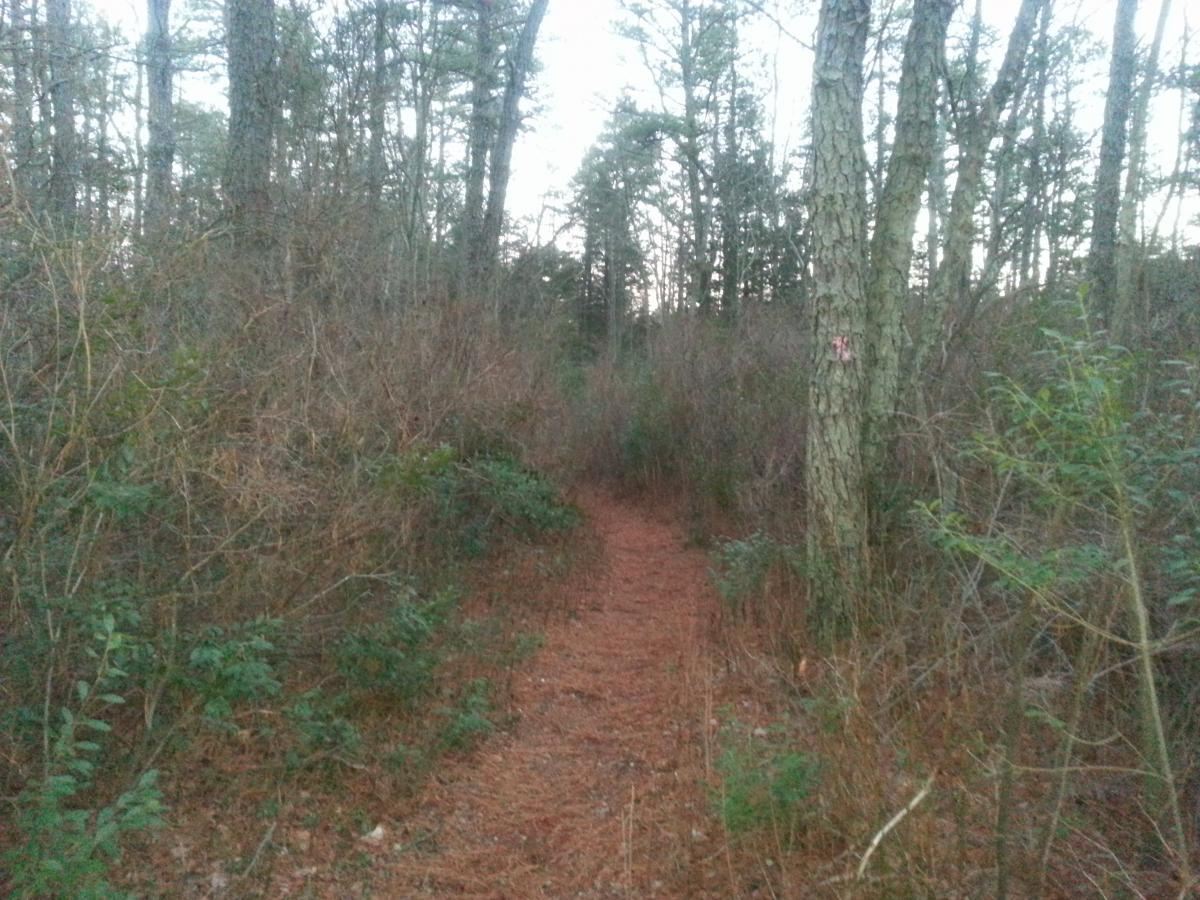 White Trail / Pakim Pond
