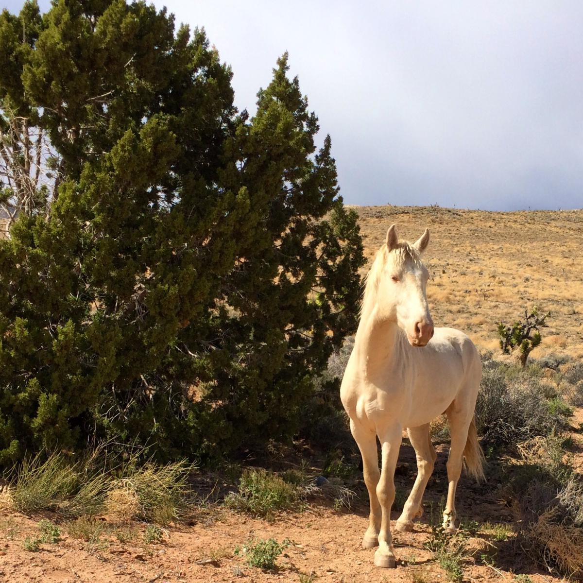 Deadhorse Loop