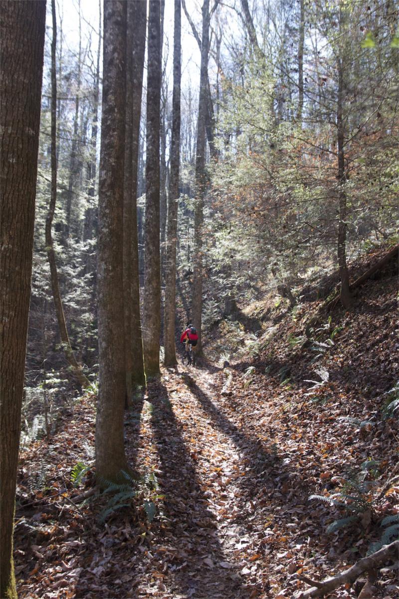 Pinhoti Trail: P1 / Bear Creek Pinhoti