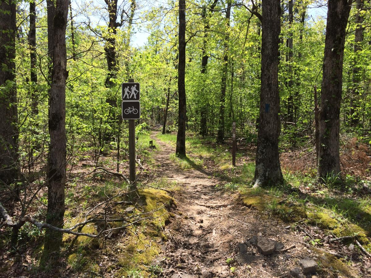 Ouachita Trail: Foran Gap