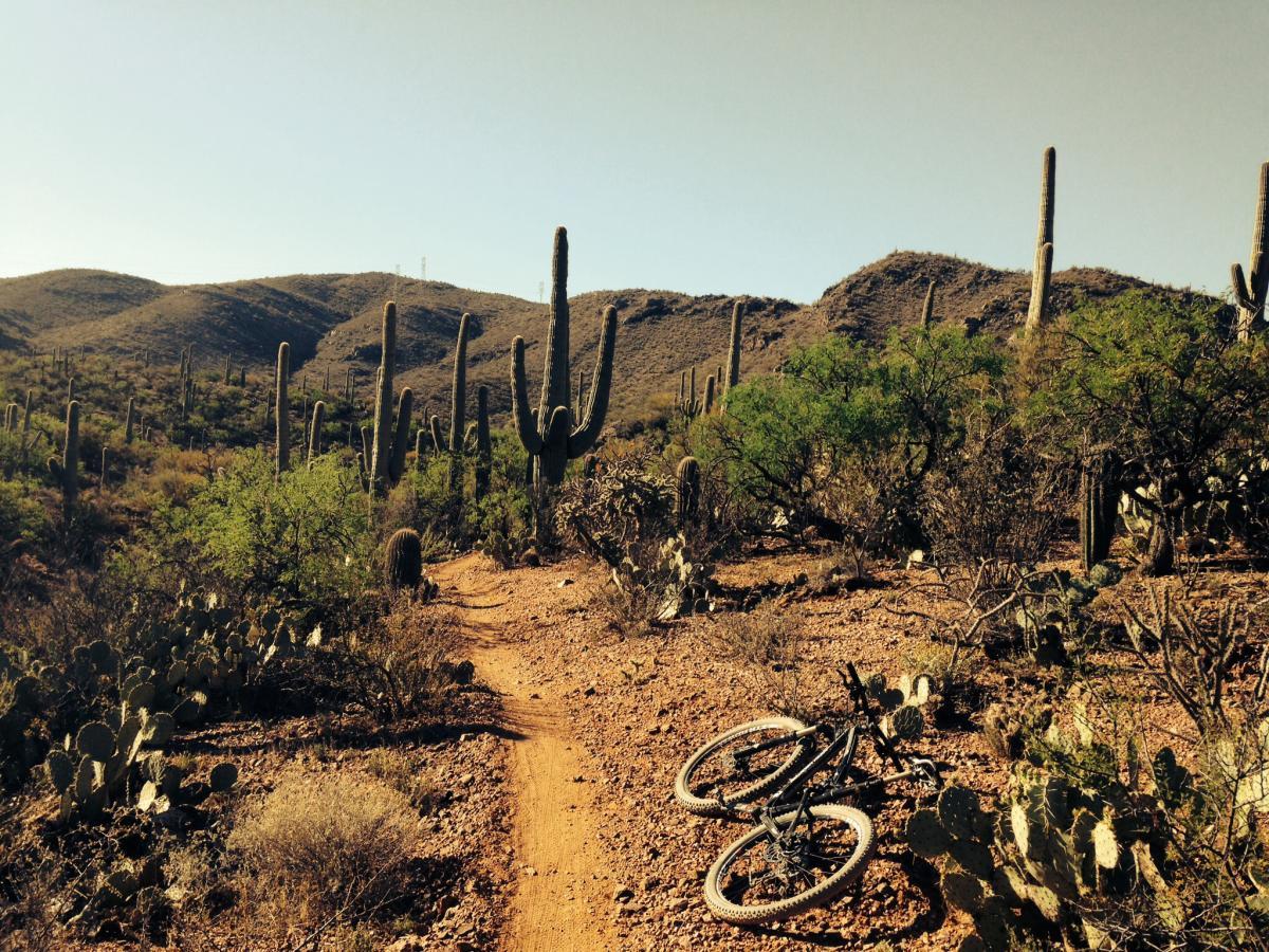 Arizona Trail: Cienega Corridor