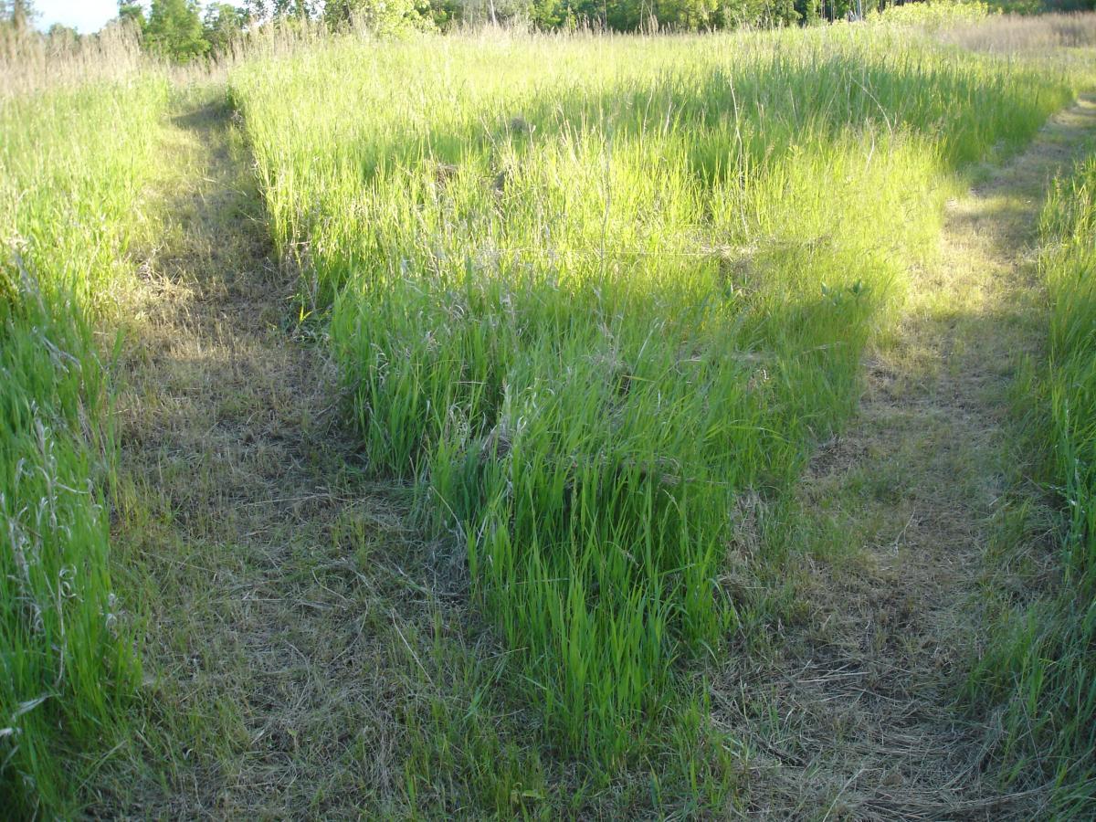 Bison Plant