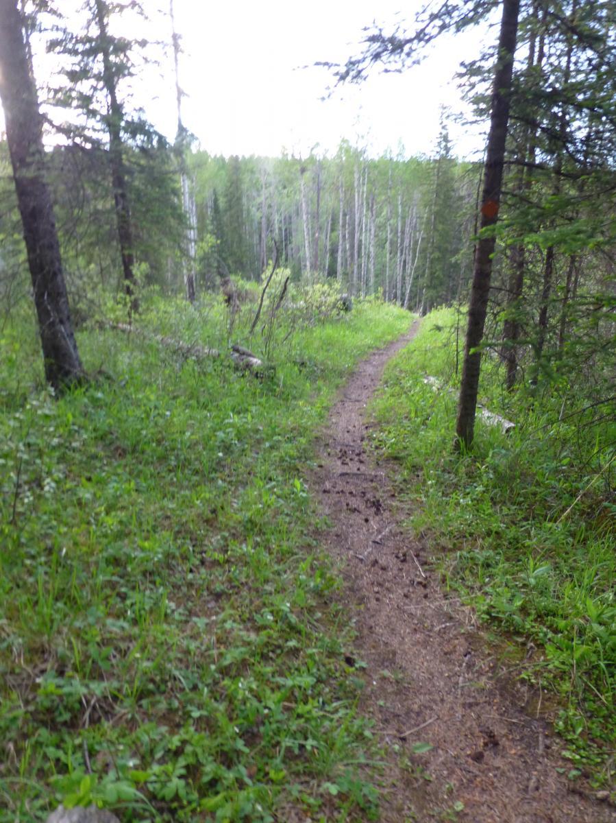 Happy Creek Trail System