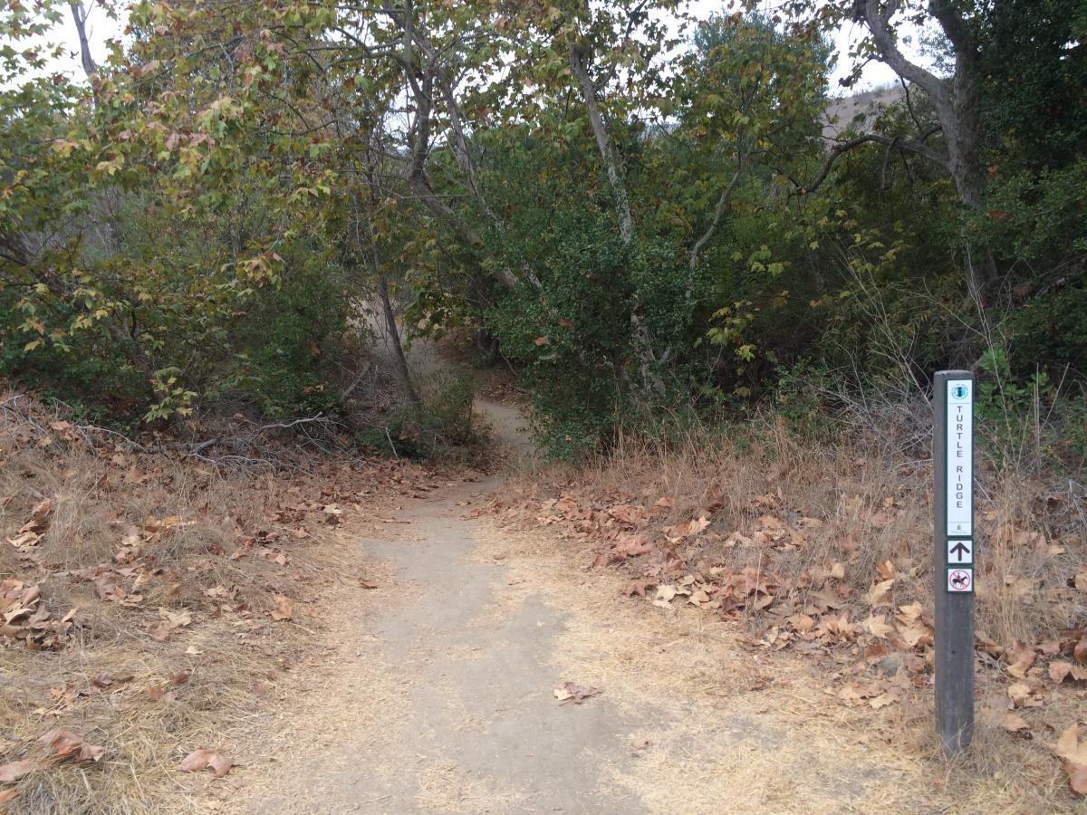 Turtle Ridge Singletrack