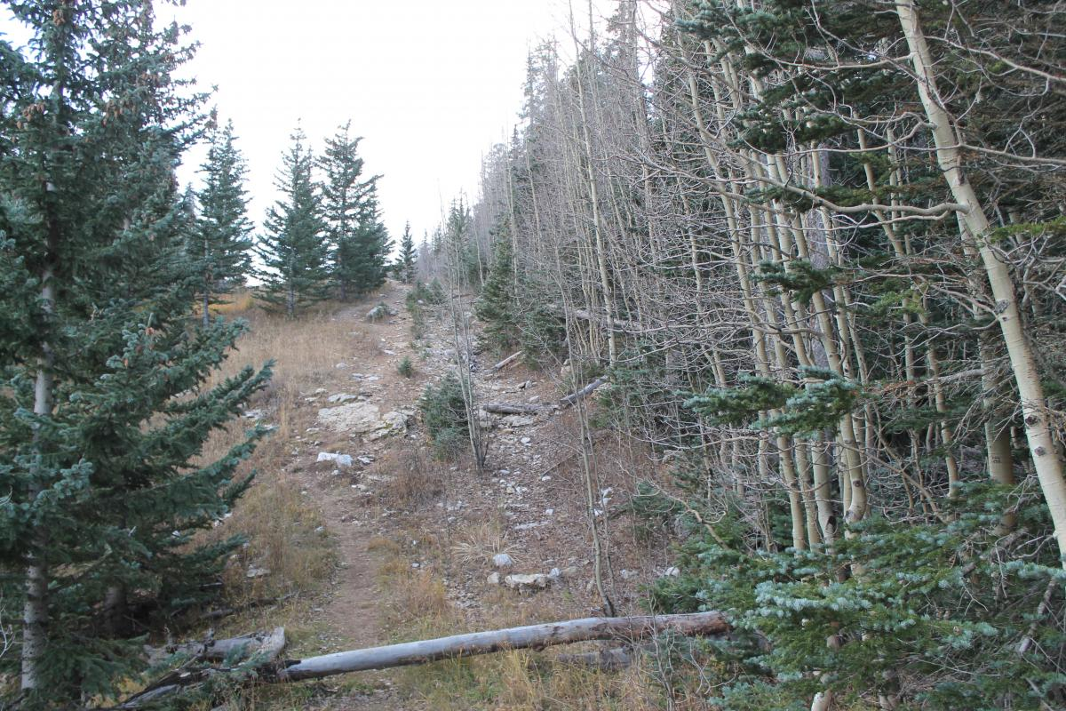 Ellis Trail