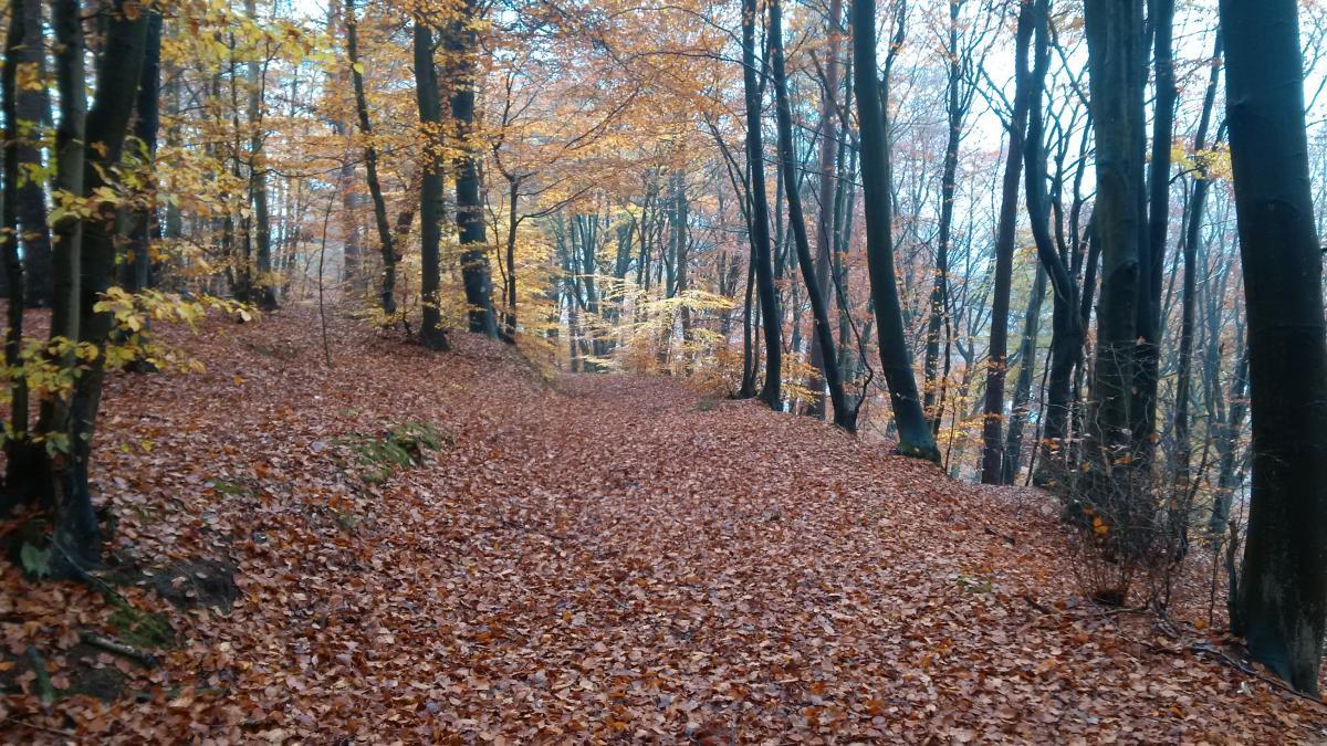 Hohenecken Trails