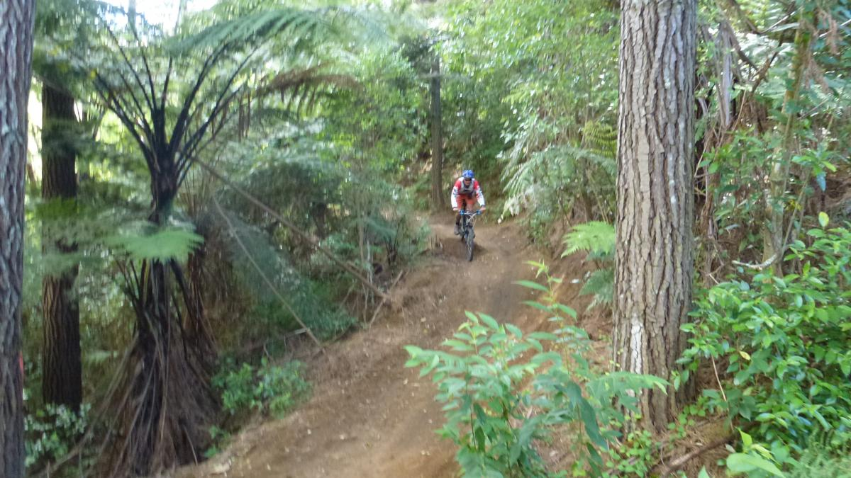 Oropi Grove mountain bike park