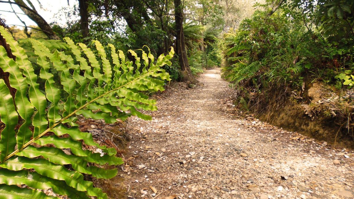 Waikato River Trails: 3 Waipapa