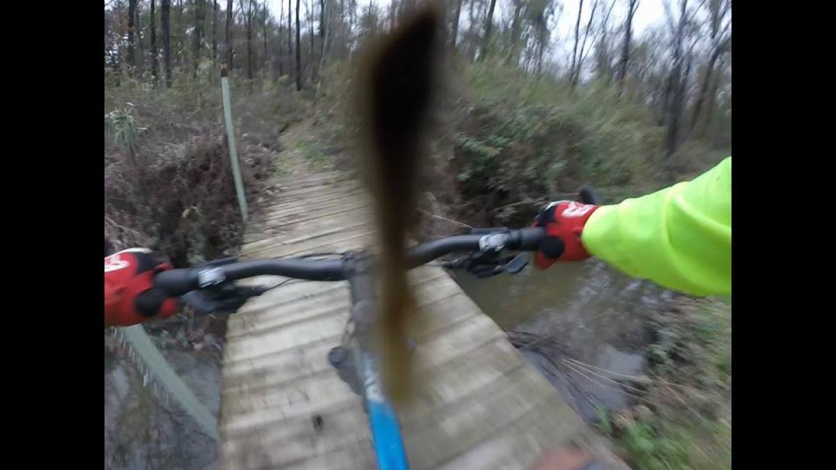 Big Tree Trails