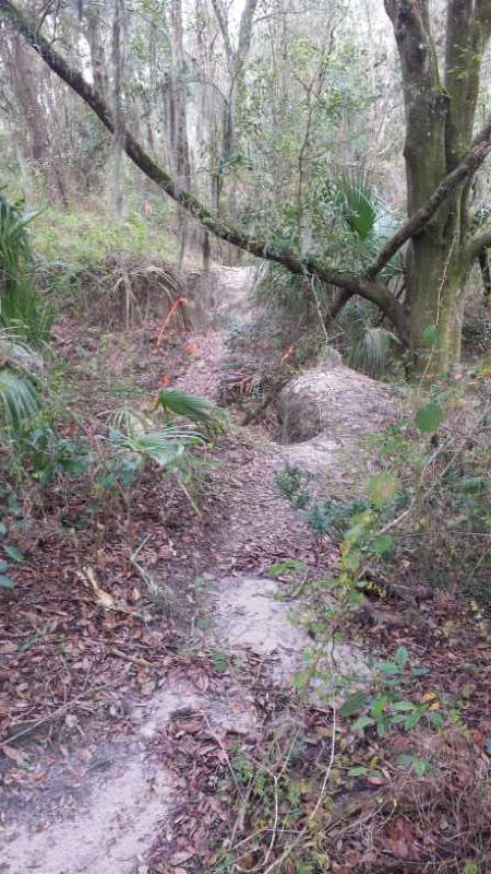 Sydney Dover Trails