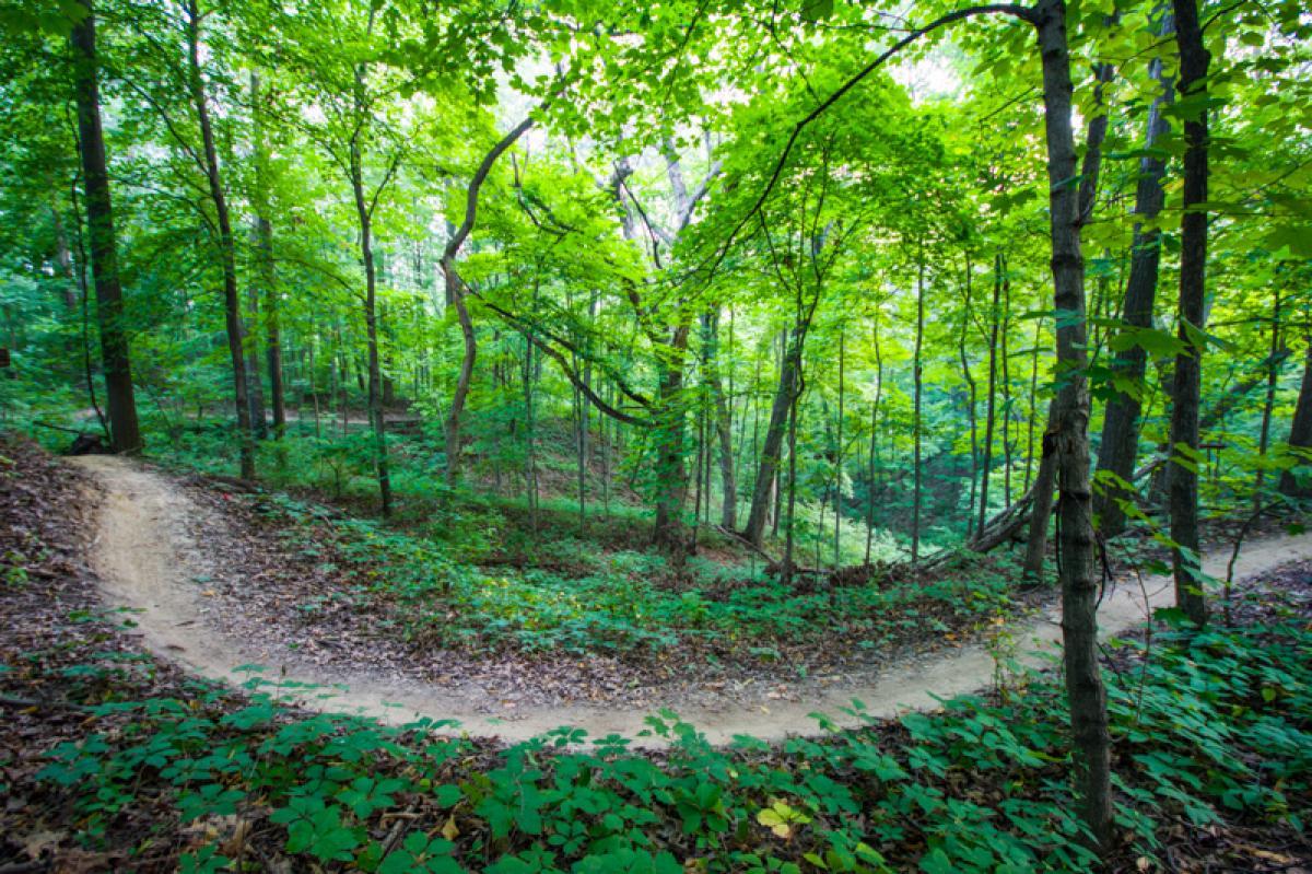 Illiniwek Forest Preserve