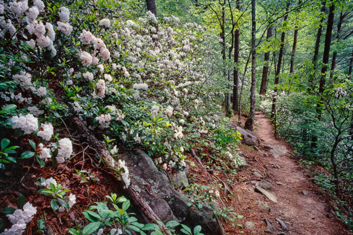 Mountain Laurel Trails