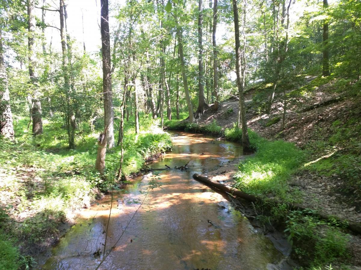 Rancocas State Park - Westampton