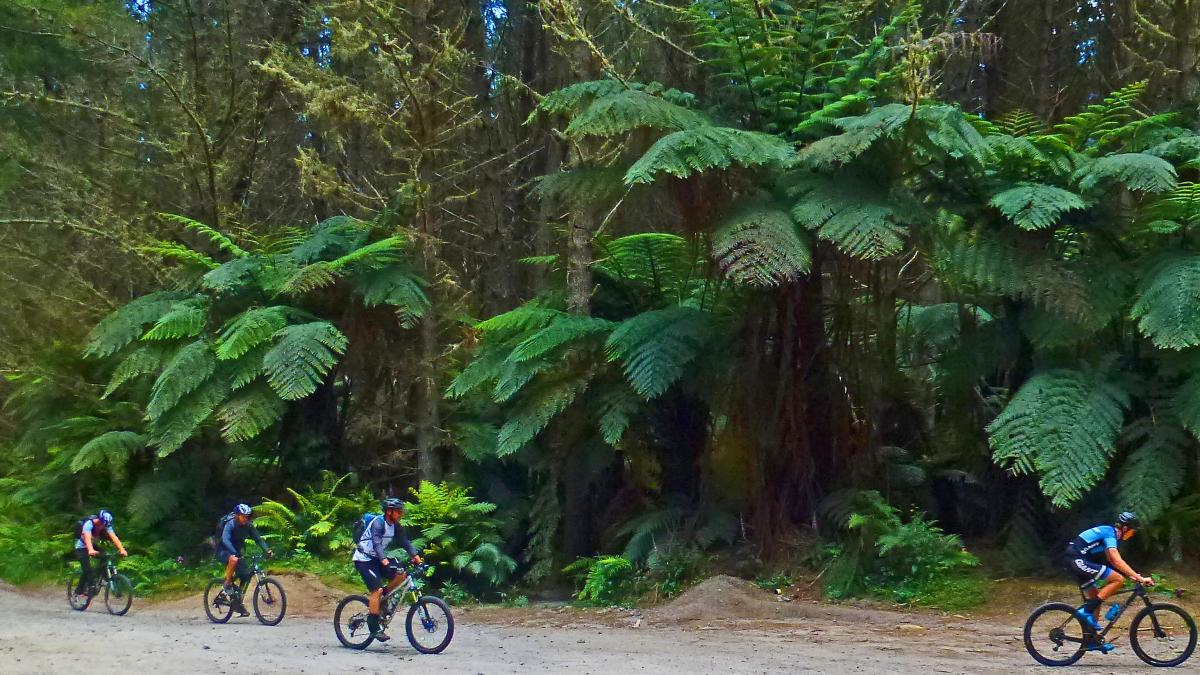 Whaka Forest - The Redwoods