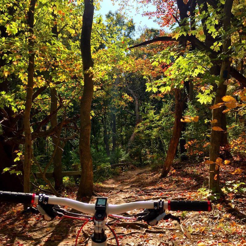 Stillwell Woods